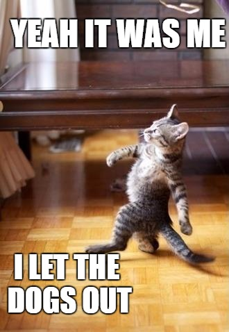 Cool Cat Stroll Meme |  YEAH IT WAS ME; I LET THE DOGS OUT | image tagged in memes,cool cat stroll | made w/ Imgflip meme maker