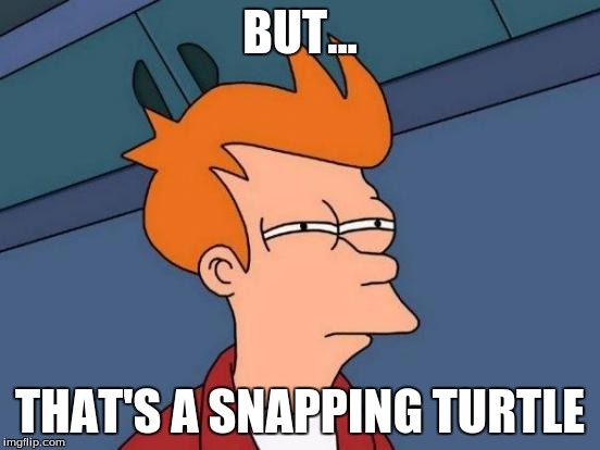 Futurama Fry Meme | BUT... THAT'S A SNAPPING TURTLE | image tagged in memes,futurama fry | made w/ Imgflip meme maker