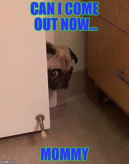Guilty Pug | CAN I COME OUT NOW... MOMMY | image tagged in guilty pug | made w/ Imgflip meme maker