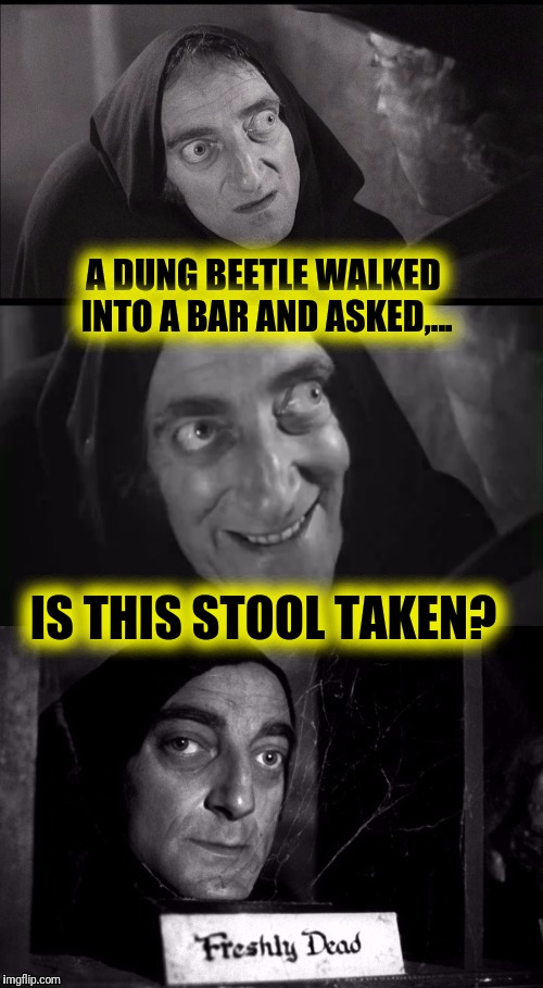 Damn Your Eyes! | A DUNG BEETLE WALKED INTO A BAR AND ASKED,... IS THIS STOOL TAKEN? | image tagged in young frankenstein | made w/ Imgflip meme maker