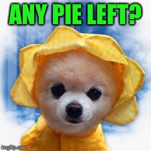 ANY PIE LEFT? | made w/ Imgflip meme maker