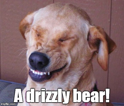 A drizzly bear! | made w/ Imgflip meme maker