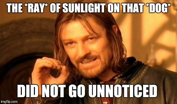 One Does Not Simply Meme | THE *RAY* OF SUNLIGHT ON THAT *DOG* DID NOT GO UNNOTICED | image tagged in memes,one does not simply | made w/ Imgflip meme maker