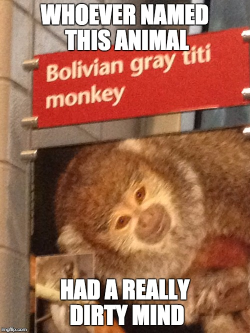 Someone really needs to talk to the guy who named all the animals |  WHOEVER NAMED THIS ANIMAL; HAD A REALLY DIRTY MIND | image tagged in monkey,dirty mind | made w/ Imgflip meme maker