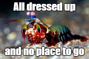 All dressed up and no place to go | image tagged in fancy,color,cool | made w/ Imgflip meme maker