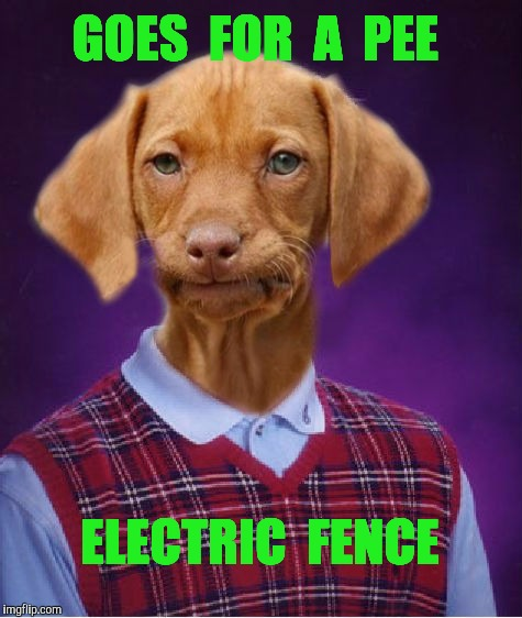Bad Luck Raydog | GOES  FOR  A  PEE ELECTRIC  FENCE | image tagged in bad luck raydog,pee,dog,electric,fence | made w/ Imgflip meme maker