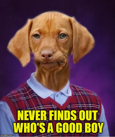 Bad Luck Raydog | NEVER FINDS OUT WHO'S A GOOD BOY | image tagged in bad luck raydog | made w/ Imgflip meme maker