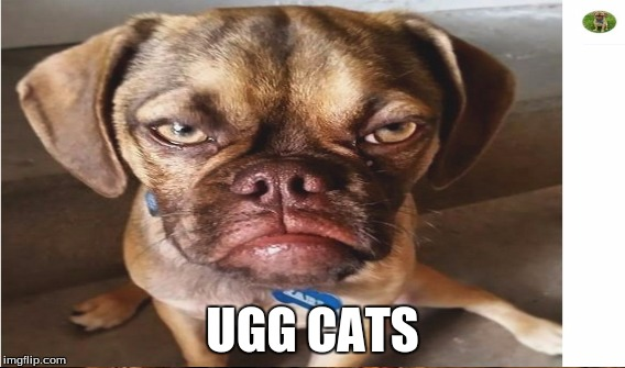 UGG CATS | made w/ Imgflip meme maker