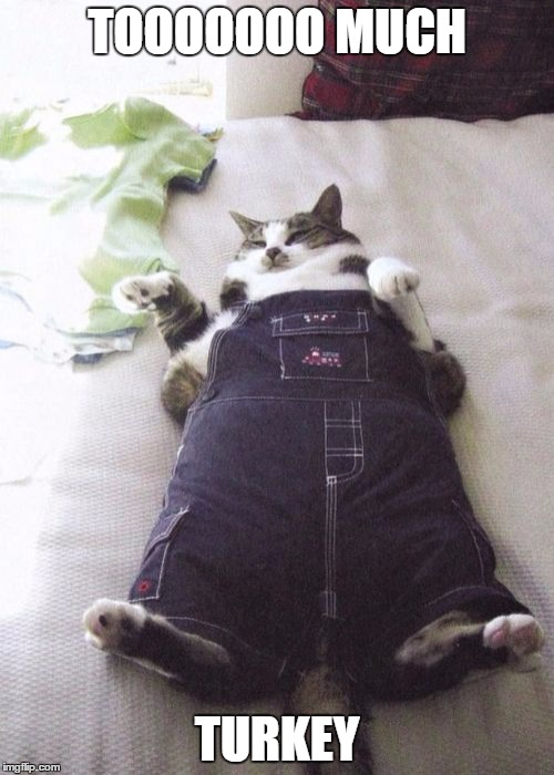 Fat Cat | TOOOOOOO MUCH TURKEY | image tagged in memes,fat cat | made w/ Imgflip meme maker