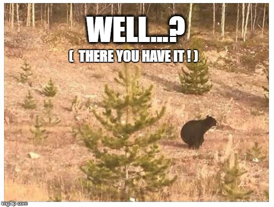 In the woods | WELL...? (  THERE YOU HAVE IT ! ) | image tagged in bear | made w/ Imgflip meme maker