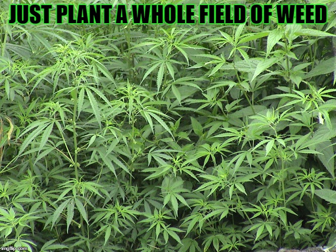 JUST PLANT A WHOLE FIELD OF WEED | made w/ Imgflip meme maker