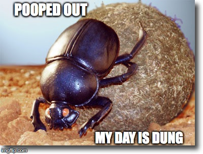 POOPED OUT MY DAY IS DUNG | made w/ Imgflip meme maker