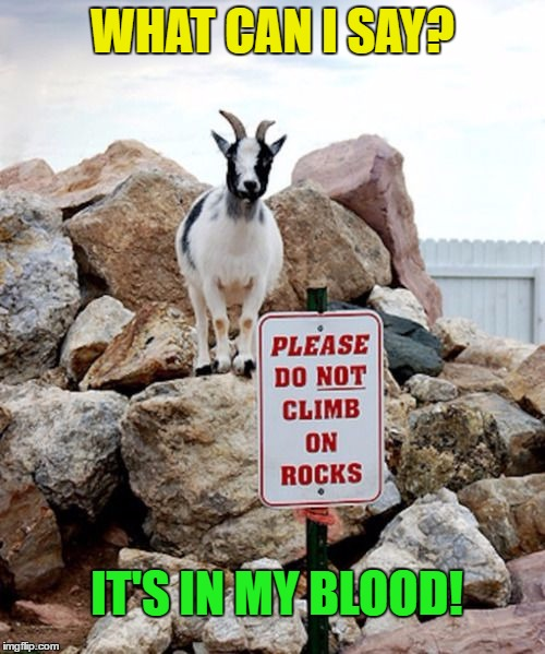It's in my blood | WHAT CAN I SAY? IT'S IN MY BLOOD! | image tagged in memes,funny,goat,funny memes,rocks,humor | made w/ Imgflip meme maker