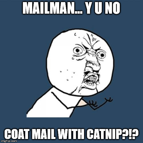 Y U No Meme | MAILMAN... Y U NO COAT MAIL WITH CATNIP?!? | image tagged in memes,y u no | made w/ Imgflip meme maker
