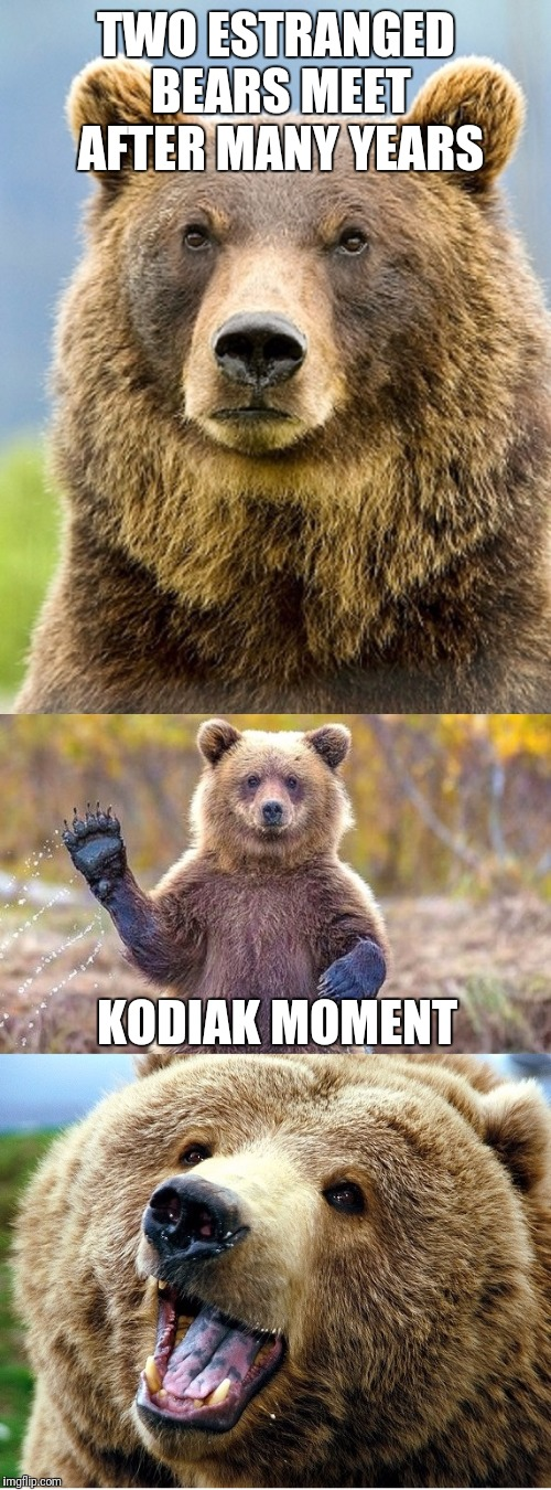 TWO ESTRANGED BEARS MEET AFTER MANY YEARS KODIAK MOMENT | made w/ Imgflip meme maker
