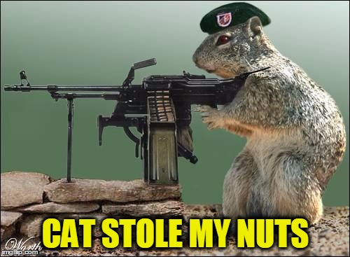CAT STOLE MY NUTS | made w/ Imgflip meme maker