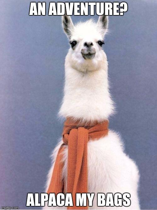 ALPACA MY BAGS | image tagged in alpaca scarf |