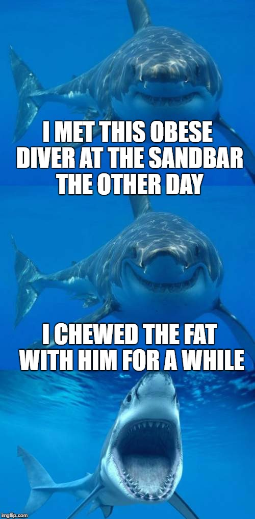 Bad shark pun small talk | I MET THIS OBESE DIVER AT THE SANDBAR THE OTHER DAY I CHEWED THE FAT WITH HIM FOR A WHILE | image tagged in bad shark pun,memes,obesity,fat ass,sharks,eating | made w/ Imgflip meme maker