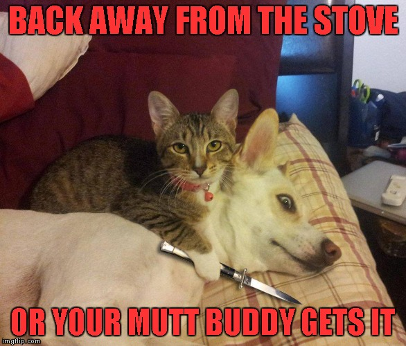 BACK AWAY FROM THE STOVE OR YOUR MUTT BUDDY GETS IT | made w/ Imgflip meme maker
