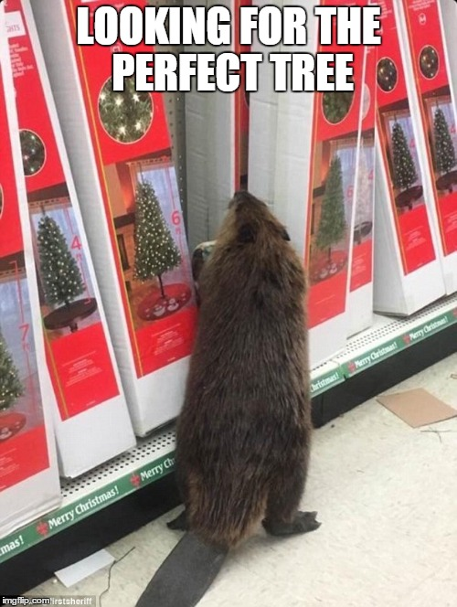 Dollar General Beaver | LOOKING FOR THE PERFECT TREE | image tagged in dollar general beaver | made w/ Imgflip meme maker