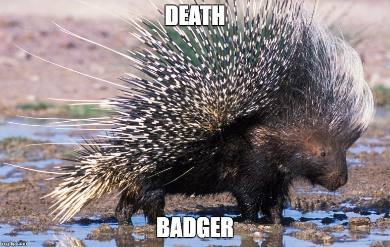 Names for things #9 |  DEATH; BADGER | image tagged in memes,porcupine,funny,death,badger,names for things | made w/ Imgflip meme maker