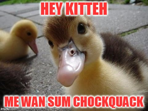 HEY KITTEH ME WAN SUM CHOCKQUACK | made w/ Imgflip meme maker