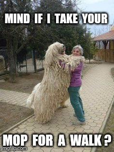 MIND  IF  I  TAKE  YOUR MOP  FOR  A  WALK ? | made w/ Imgflip meme maker