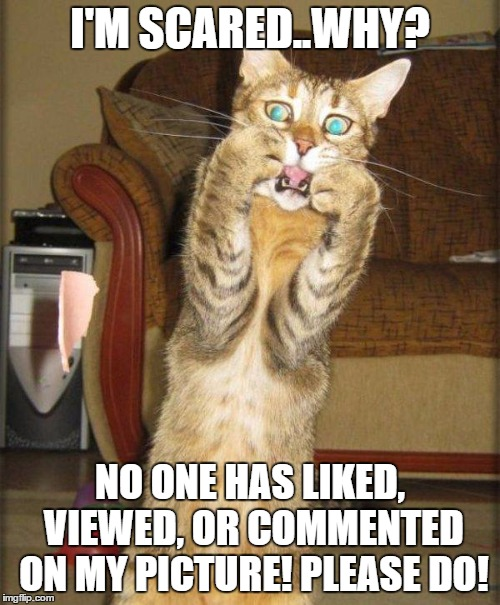 help | I'M SCARED..WHY? NO ONE HAS LIKED, VIEWED, OR COMMENTED ON MY PICTURE! PLEASE DO! | image tagged in scaredy cat | made w/ Imgflip meme maker