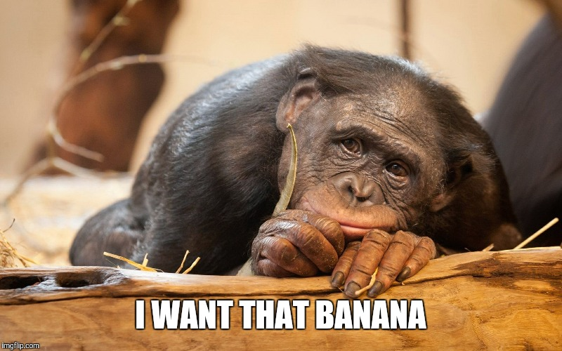 I WANT THAT BANANA | made w/ Imgflip meme maker
