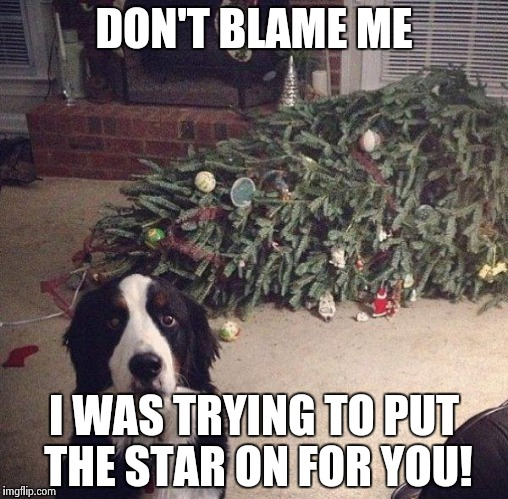 Dog Christmas Tree |  DON'T BLAME ME; I WAS TRYING TO PUT THE STAR ON FOR YOU! | image tagged in dog christmas tree | made w/ Imgflip meme maker