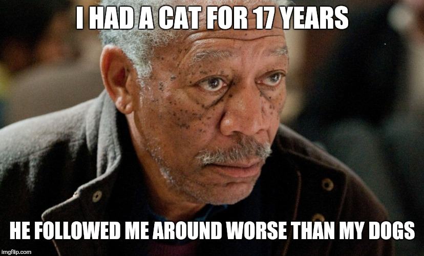 Morgan Freeman | I HAD A CAT FOR 17 YEARS HE FOLLOWED ME AROUND WORSE THAN MY DOGS | image tagged in morgan freeman | made w/ Imgflip meme maker