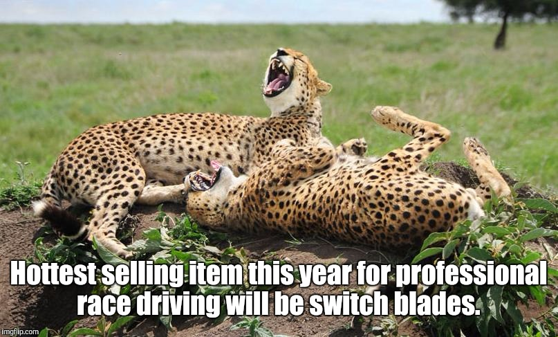Cheetahs | Hottest selling item this year for professional race driving will be switch blades. | image tagged in cheetahs | made w/ Imgflip meme maker