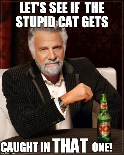 The Most Interesting Man In The World Meme | LET'S SEE IF  THE STUPID CAT GETS CAUGHT IN ONE! THAT | image tagged in memes,the most interesting man in the world | made w/ Imgflip meme maker