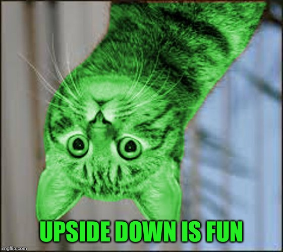 RayCat WTF | UPSIDE DOWN IS FUN | image tagged in raycat wtf | made w/ Imgflip meme maker