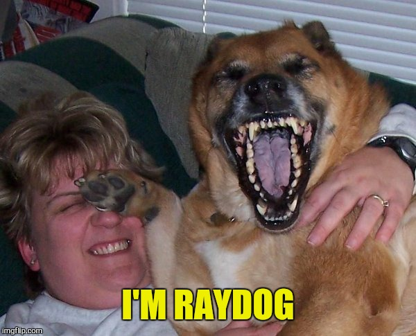 laughing dog | I'M RAYDOG | image tagged in laughing dog | made w/ Imgflip meme maker