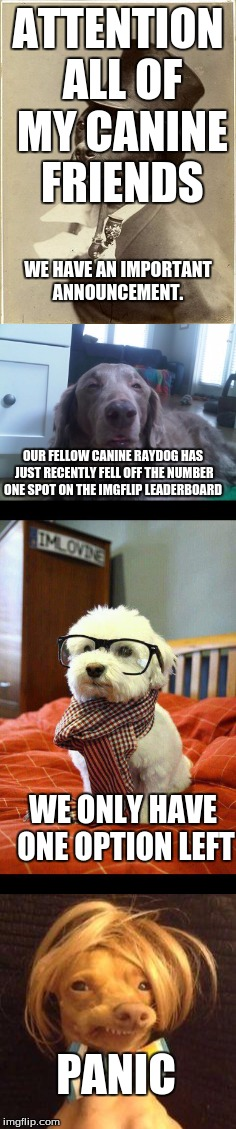 Props to DashHopes for surpassing raydog, but the doggies will be watching and waiting for the time to strike back | ATTENTION ALL OF MY CANINE FRIENDS WE HAVE AN IMPORTANT ANNOUNCEMENT. OUR FELLOW CANINE RAYDOG HAS JUST RECENTLY FELL OFF THE NUMBER ONE SPO | image tagged in dog,raydog,dashhopes,memes,funny | made w/ Imgflip meme maker