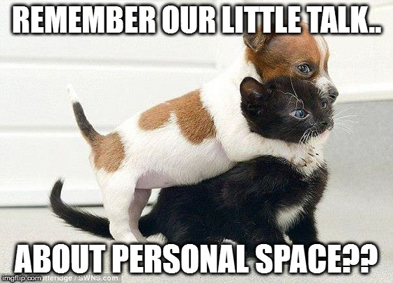 Like cats and dogs | REMEMBER OUR LITTLE TALK.. ABOUT PERSONAL SPACE?? | image tagged in funny animals,cats,funny memes,dogs | made w/ Imgflip meme maker