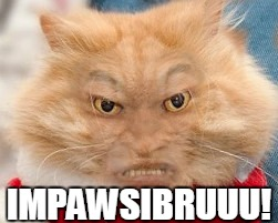 Impossibru Cat | IMPAWSIBRUUU! | image tagged in impossibru cat | made w/ Imgflip meme maker