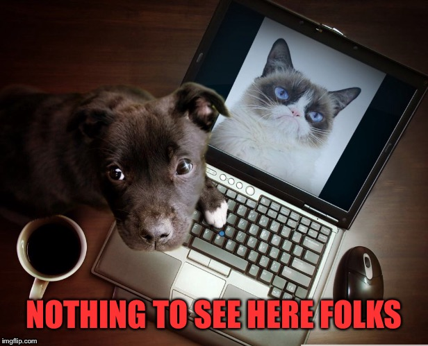 Caption this image.  | NOTHING TO SEE HERE FOLKS | image tagged in dog finds internet,grumpy cat | made w/ Imgflip meme maker