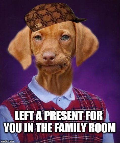 Bad Luck Raydog Scumbag | LEFT A PRESENT FOR YOU IN THE FAMILY ROOM | image tagged in bad luck raydog,scumbag,dog poop,poop,pooper | made w/ Imgflip meme maker
