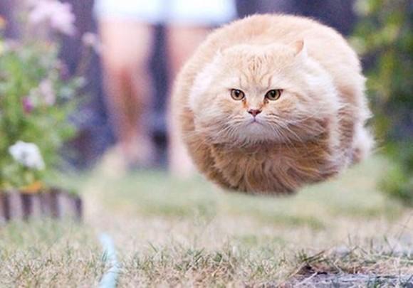 Unduh 92+  Gambar Kucing Gemesin Lucu Gratis