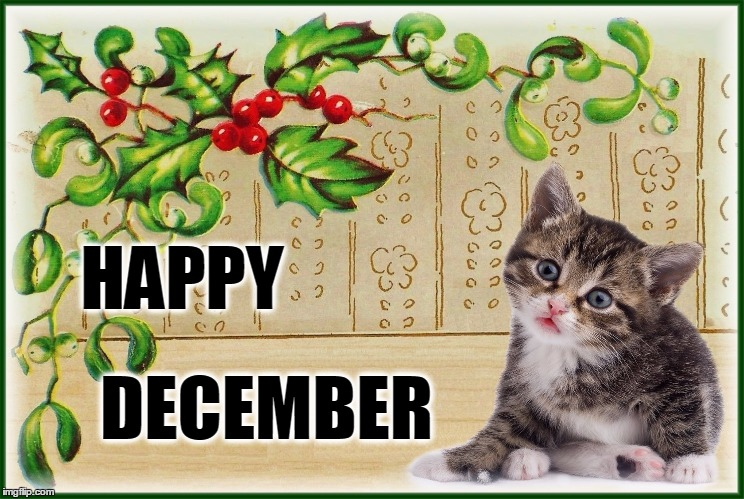Image result for december cats