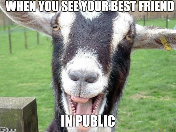 Funny Memes For Your Best Friend : Funny goat memes imgflip