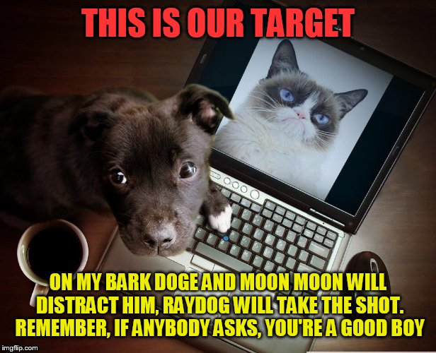 A top secret mission (from a Coolermommy2.0 template) | THIS IS OUR TARGET ON MY BARK DOGE AND MOON MOON WILL DISTRACT HIM, RAYDOG WILL TAKE THE SHOT. REMEMBER, IF ANYBODY ASKS, YOU'RE A GOOD BOY | image tagged in memes,doge,dog,grumpy cat,raydog,moon moon | made w/ Imgflip meme maker