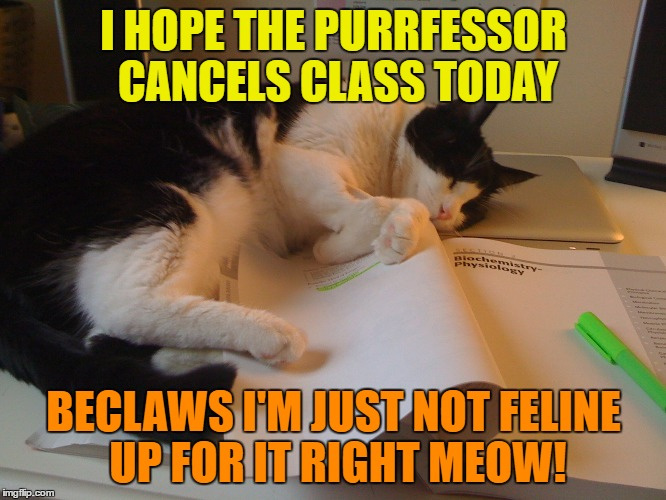 I hope class is cancelled today | I HOPE THE PURRFESSOR CANCELS CLASS TODAY BECLAWS I'M JUST NOT FELINE UP FOR IT RIGHT MEOW! | image tagged in memes,funny,cat,class,humor,funny memes | made w/ Imgflip meme maker