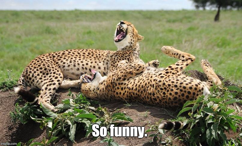 Cheetahs | So funny. | image tagged in cheetahs | made w/ Imgflip meme maker