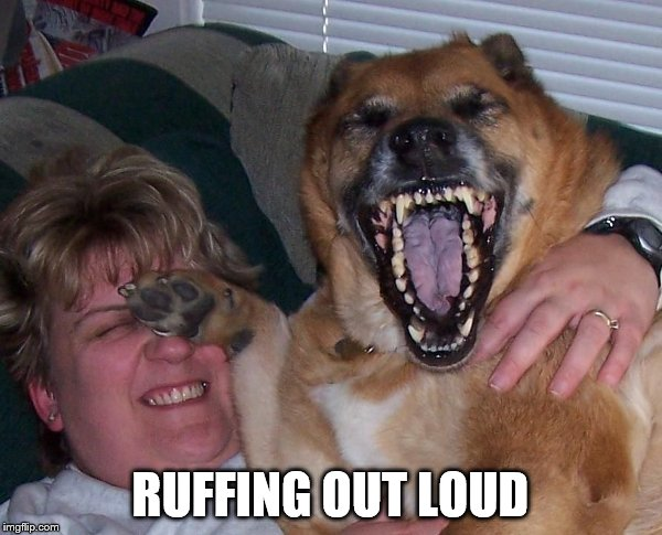 laughing dog | RUFFING OUT LOUD | image tagged in laughing dog | made w/ Imgflip meme maker