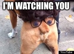 Butt | I'M WATCHING YOU | image tagged in butt | made w/ Imgflip meme maker