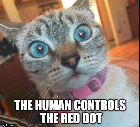 The Red Dot | THE HUMAN CONTROLS THE RED DOT | image tagged in cat,red dot,human,conspiracy | made w/ Imgflip meme maker
