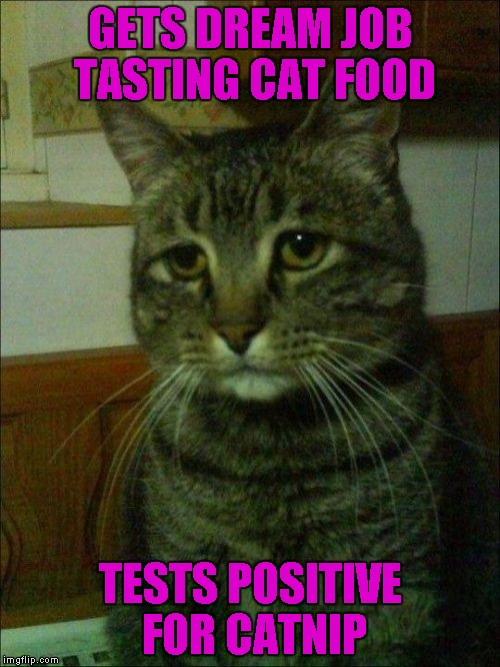 Depressed Cat | GETS DREAM JOB TASTING CAT FOOD TESTS POSITIVE FOR CATNIP | image tagged in memes,depressed cat | made w/ Imgflip meme maker